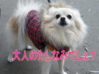 DSCF9144_convert_20091206033749.jpg