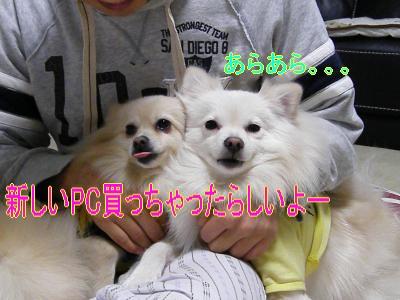 DSCF9486_convert_20091116031707.jpg
