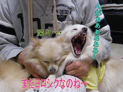 DSCF9493_convert_20091116031854.jpg