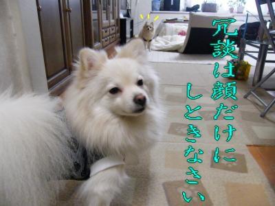 DSCF9584_convert_20091221040950.jpg