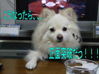 DSCF9595_convert_20091221041300.jpg