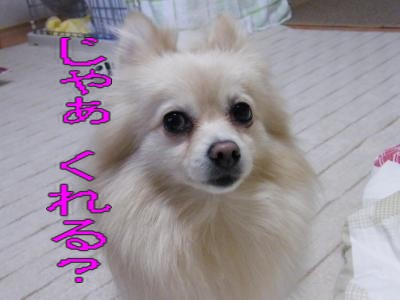 DSCF9596_convert_20091221041346.jpg