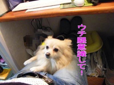 DSCF9665_convert_20091224041424.jpg