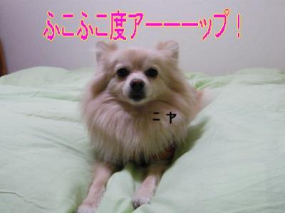 DSCF9850_convert_20091130032911.jpg