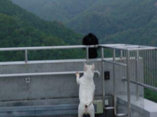 石松の友達の黒松