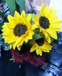 050520flowers.jpg