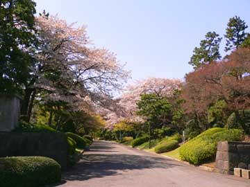 koukyo-sakura.jpg