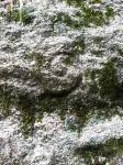 石垣の渦巻き紋