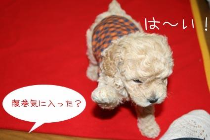 haramaki3