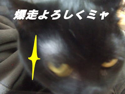 07_11_8-5pg..jpg