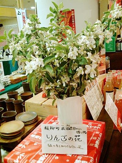 林檎の花1