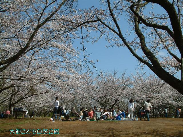大池こども自然公園桜山