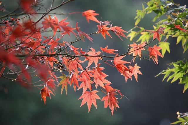大池公園紅葉はじめ