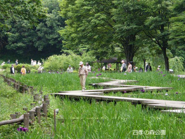 四季の森公園菖蒲田