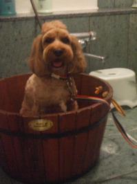 おけ風呂~