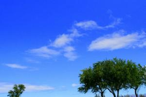青い空に浮かぶ