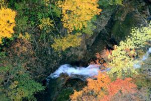 紅葉と流れ