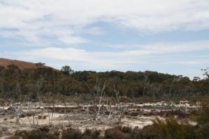 木々の被害