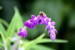 蜂と・・・