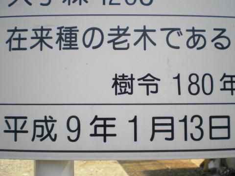 20070410114639.jpg
