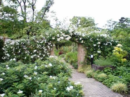バラいっぱいの石垣のアーチ