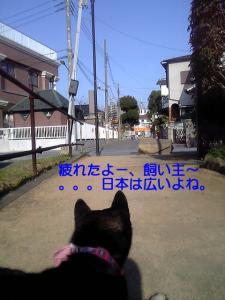 実家散歩③