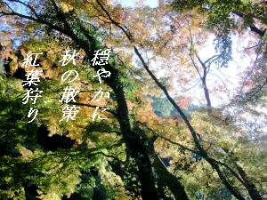 kouyou-9.png