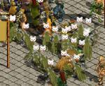 ファミの群れ……(´ω`)