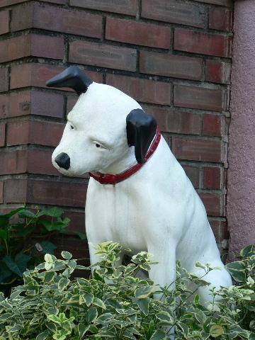 0120ビクター犬