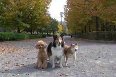 公園も秋深し