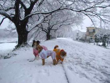 今日は節分雪が降りました