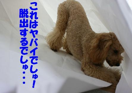 IMG_3504bbb.jpg