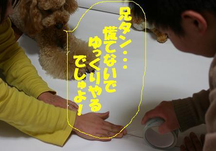 IMG_3520bbb.jpg