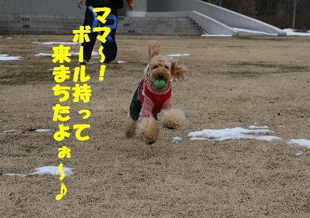 IMG_3773bbb.jpg
