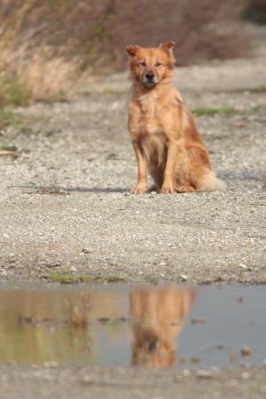 河川敷の犬