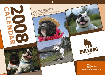 bulldog_08.jpg