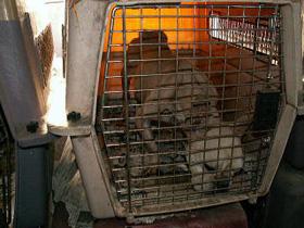 dogpark01-2v_20081009131553.jpg