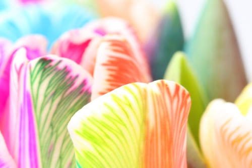 Happy_Tulip_Rainbow_1_by_HappyRoses.jpg
