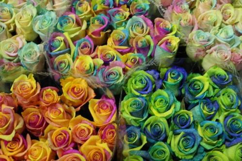 happy_roses.jpg