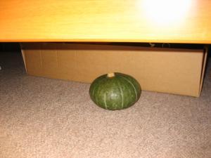 かぼちゃ…