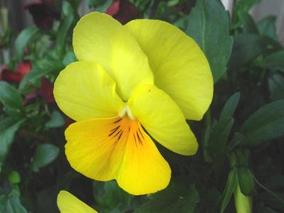 こんな素敵な花のような方が・・・・・・
