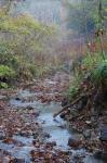 落ち葉の渓