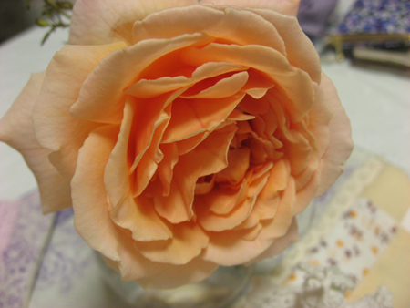 20071011_40.jpg
