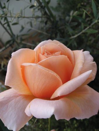 20071018_03.jpg