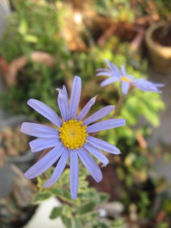 20080108_07.jpg