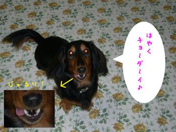 20061017235315.jpg