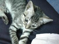 Kitten 013s