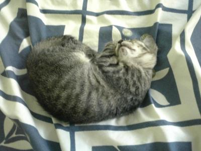 Kitten 023m