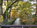 玉川上水で紅葉狩り