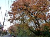 五日市街道で紅葉狩り